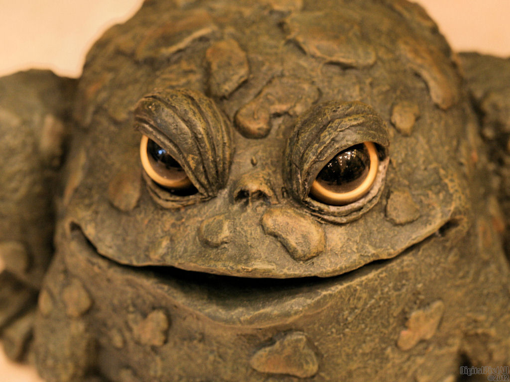 Frog Eyes Frog eyes